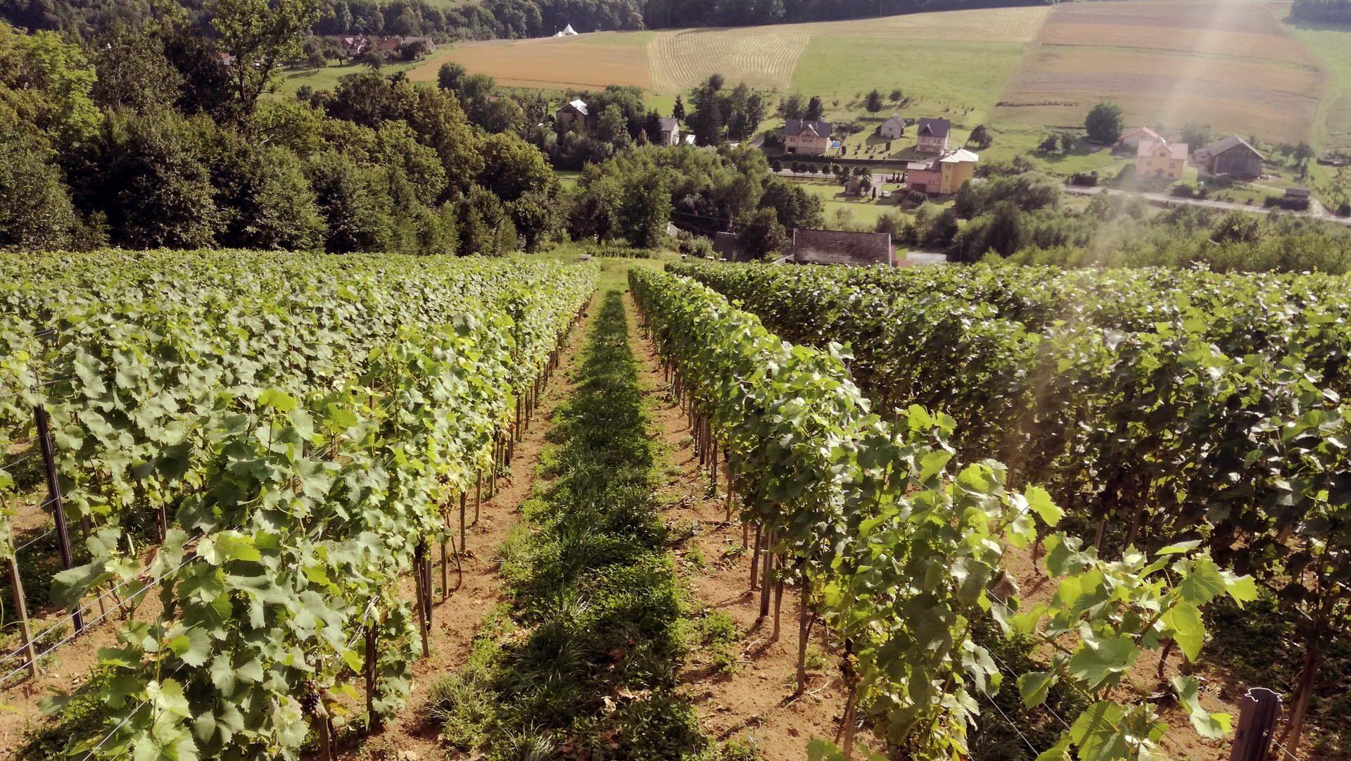 Winnica Notabene – Niewinna pasja do wina